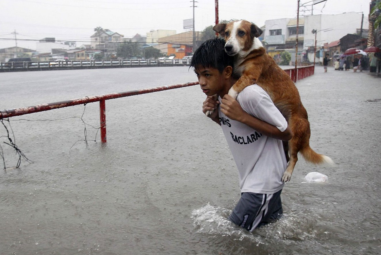 Пропавшая во время тайфуна собака нашлась, спустя год