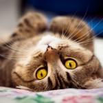 Дуфек продал кота с кроватью