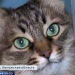 кошка машка спасла младенца