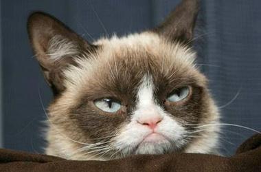 сердитый котик