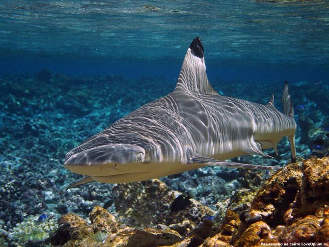 акула в аквариуме