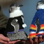 свитера для пингвинов