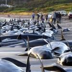 200 дельфинов выбросились на берег