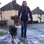 Собачья жизнь свиньи