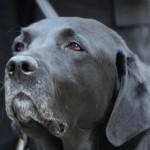 Мадера -слепая собака потерявшаяся на Аляске