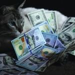 кошка и деньги