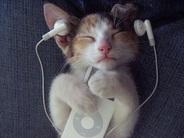 специальная музыка для кошек