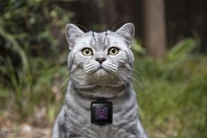 кот с камерой катскам