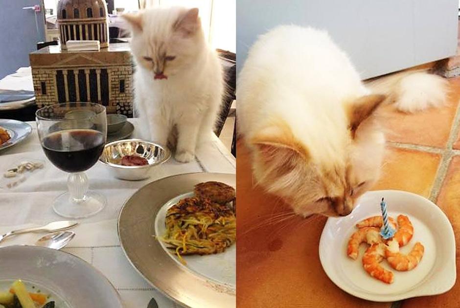 кошка шупетт лагерфелда