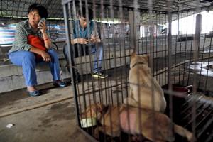 Ян Сяоюнь спасла 100 собак