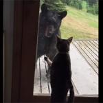 кошка прогнала медведя