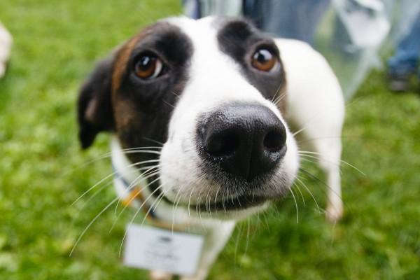 выставка догдей -пес