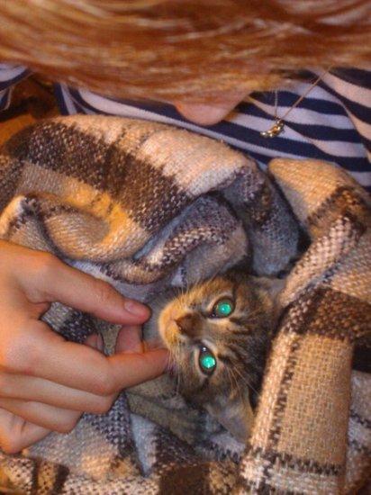 Петербуржцы героически спасли котенка- Лаки