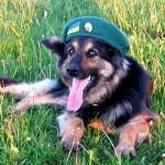 Оштрафованы за неуважение к собаке