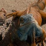 Животные и квесты в реальности