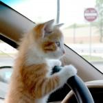 Как удалить запах кота из салона автомобиля