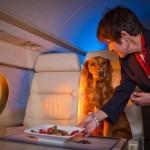 Правила перевозки животных в самолете ✈, актуальные на 2021 год