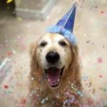Животные помогают организовать праздник