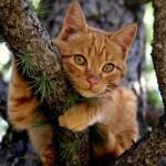 Чтобы снять кота с дерева, австралийцам пришлось скинуться