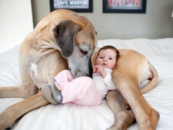 собаки-няни
