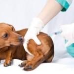 Вакцинация животных: что следует знать об этом