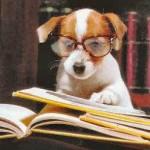 Собаки помогают учить английский