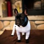 Создана одежда для собак — против шерсти в квартире