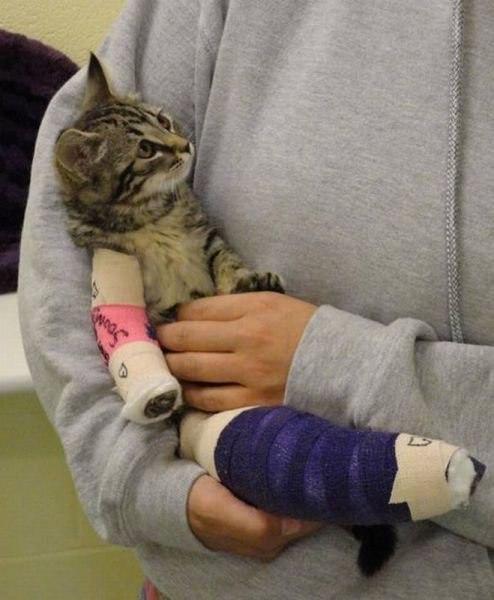 выздоравливающая кошка