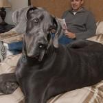 Мосгордума снова подняла вопрос о запрете содержания в квартирах собак