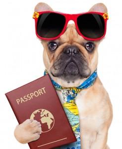 Мопс и паспорт
