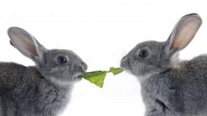 Как выбрать корм для кроликов