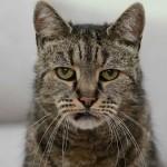Умер самый старый в мире кот — Натмег (32 года)
