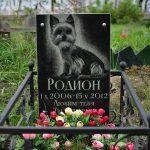 В Заволжье обнаружено тайное кладбище домашних животных
