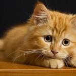 Ужесточение наказания за издевательство над животными поддержано Госдумой