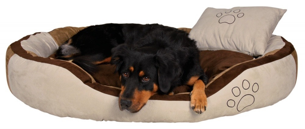 Круглый лежак собаки