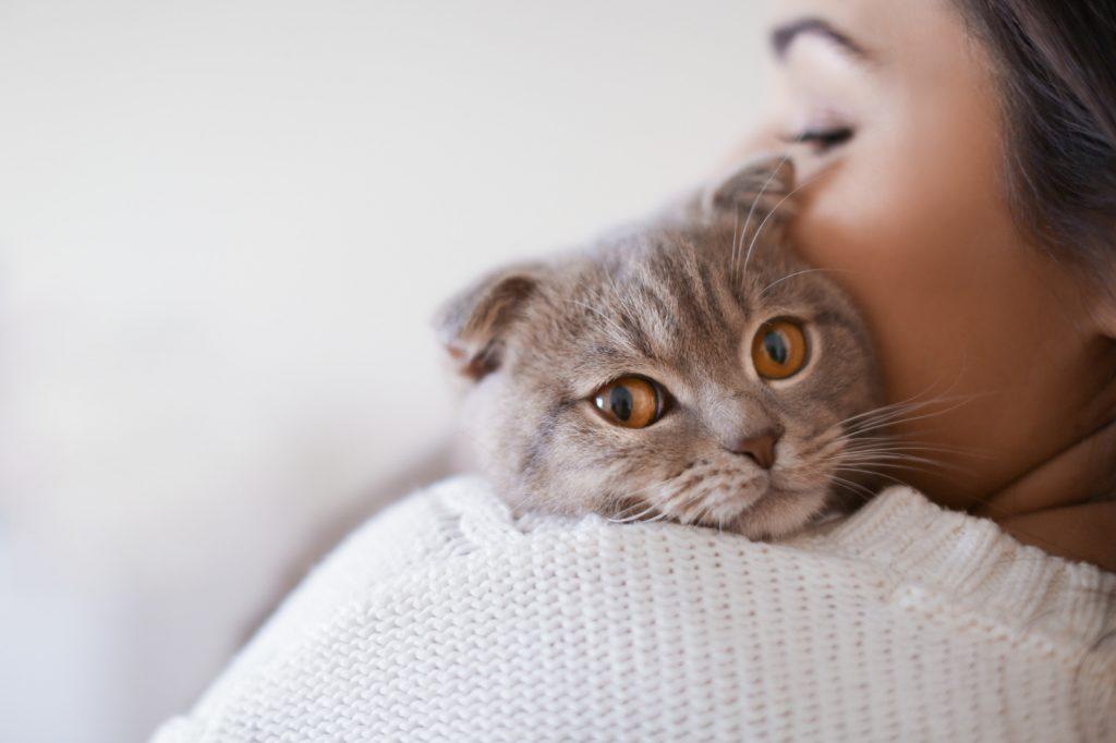 котик на плече