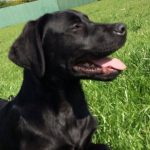 Счастливое воссоединение: пенсильванская семья нашла свою собаку спустя 10 лет