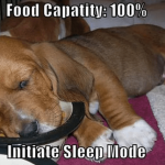 США: В собачьем корме нашли снотворное, используемое для эвтаназии