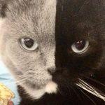 Двуликий кот — не фейк!