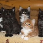 Кошки в заложниках: как нашантажировать квартиру 🐱