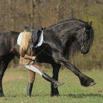Лошадь 🐴 спасла свою хозяйку от злобной собаки