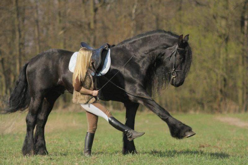 Лошадь спасла хозяйку от собаки