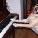 Испания: Моцарт как антистресс для служебных собак 🎼