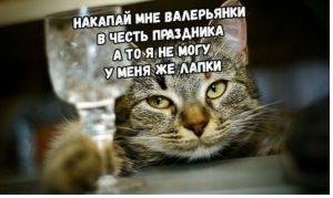 день кошки
