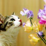 День кошки в России — 1 марта 🐾