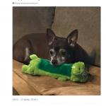 Помогли всем Twitter`ом в поиске игрушки для собаки