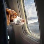 ✈ Американский авиа перевозчик United Airlines не очень любит животных ⚠ — будьте осторожны