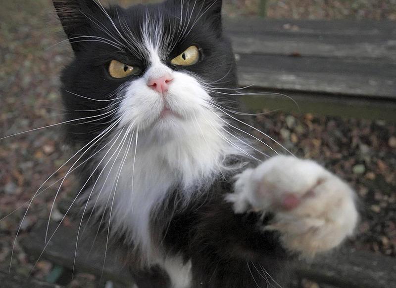 недовольный котик
