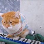 Кот-шансонье обнаружен в Минске
