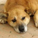 В Ростовской области ветеринар замучил более 170 собак